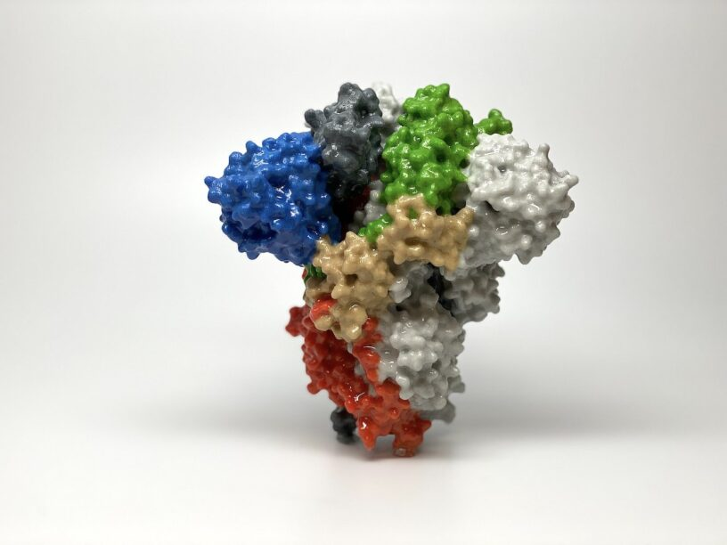 Coronavirus SARS CoV-2 Spike Protein
